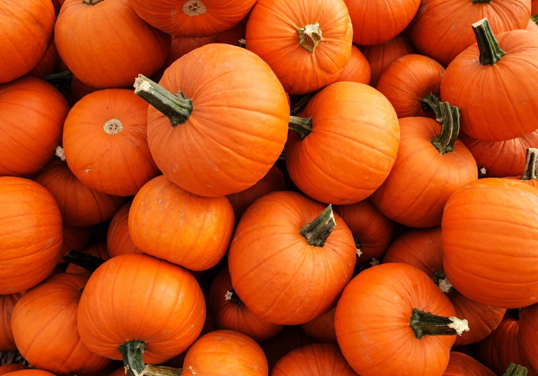 Edible Fitness: Giving Old Pumpkins Purpose | X3 Sports